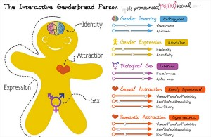 interactive-genderbread-person