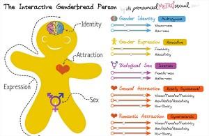 interactive-genderbread-person